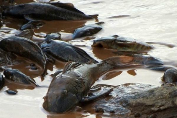 Técnicos do Ibama estão percorrendo trechos do rio Doce. - Crédito: Foto: Divulgação