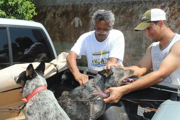 A campanha contra a raiva iniciou no dia 14 de setembro e encerrou em 24 de novembro. - Crédito: Foto: Divulgação