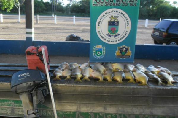 Imagem mostra parte do pescado apreendido neste período. - Crédito: Foto: Divulgação