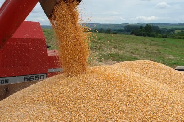 Quatro primeiras semanas de dezembro, foram de novo recorde de exportação de milho, quando o Brasil embarcou mais de 5 milhões de toneladas. - Crédito: Foto: Divulgação