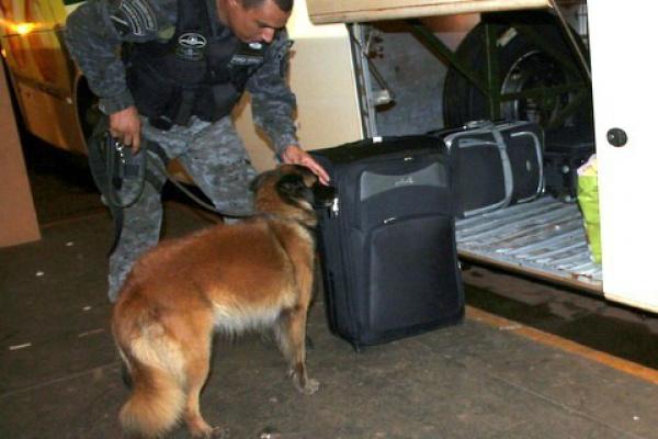 Momento em que a cadela Inca farejava bagageiro de ônibus no Terminal Rodoviário de Dourados. - Crédito: Foto: 94 FM