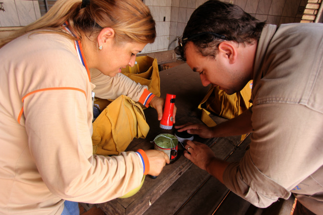 Agentes de saúde analisam vasilhame encontrado com larvas do mosquito que é  vetor da dengue. - Crédito: Foto: Divulgação