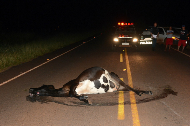 Animal que causou o acidente ficou sobre a pista  na MS-276. - Crédito: Foto: Divulgação