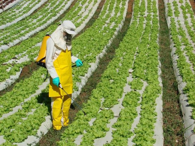 Pesquisadores afirmam que  herbicidas são prejudiciais. - Crédito: Foto: Divulgação