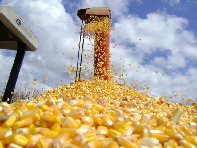 Saca de milho registrou média de R$ 34,26, aumento de 5,7%. - Crédito: Foto: Divulgação