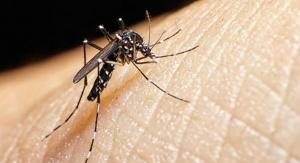 Experiências para combater o mosquito Aedes aegypti são apresentados por alunos durante feira em São Paulo -