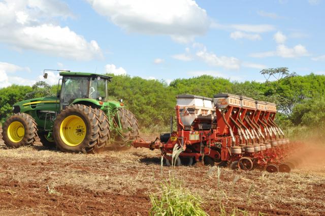 Quase toda a  área de 135 mil hectares do milho já está semeada em Dourados; no Estado, mais de 60% da área já está plantada, sendo a região sul a mais adiantada. - Crédito: Foto: Hedio Fazan