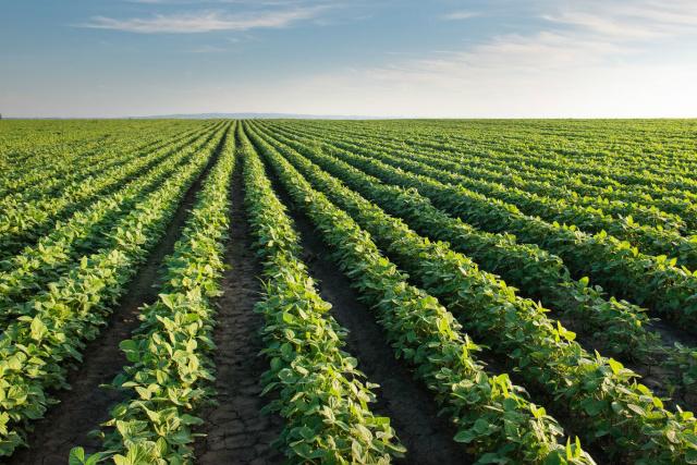 Área cultivada com soja ficou mais de 8% maior em todo MS. - Crédito: Foto: Divulgação