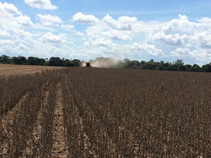 Excesso de chuva prejudicou diversas lavouras de soja em Mato Grosso do Sul. Foto: Divulgação -