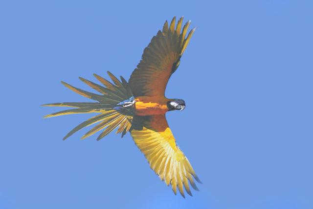Manoel de Barros não só atribui um sentido literário aos pássaros, ao sol, às águas e aos seres, como também humaniza as paisagens pantaneiras. - Crédito: Foto: Marcelo Silva de Oliveira