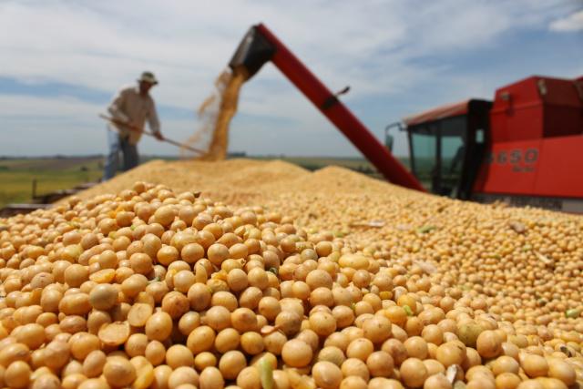 Soja em grão lidera a pauta de exportações em termo de valor. - Crédito: Foto: Divulgação