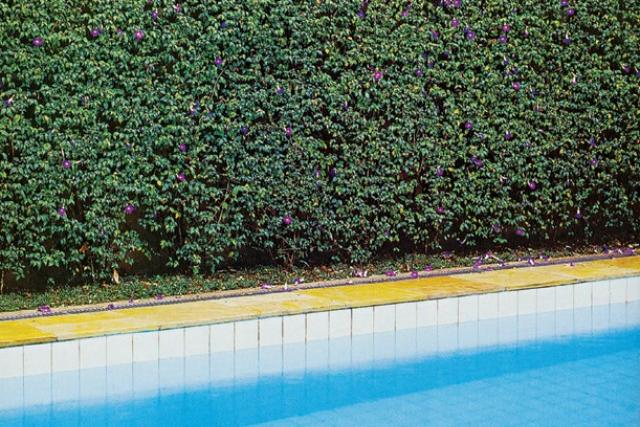 Alguma plantas são utilizadas para separar ambientes e até mesmo garantir privacidade. - Crédito: Foto: Divulgação