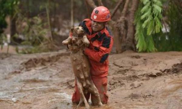 Resgate de animais registrados pelo site Portal do Dog -