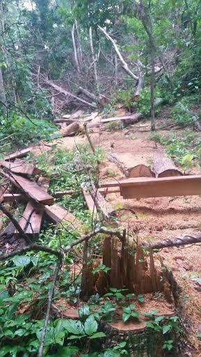 Dono de chácara leva multa por exploração de madeira  -