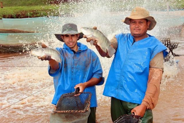 ATeG Piscicultura atende atualmente 44 produtores rurais em cinco municípios do Estado de Mato Grosso do Sul. - Crédito: Foto: Divulgação