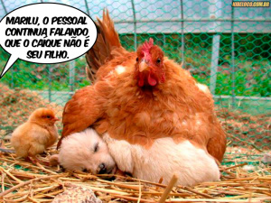 Do MS para a Esplanada em Brasília -