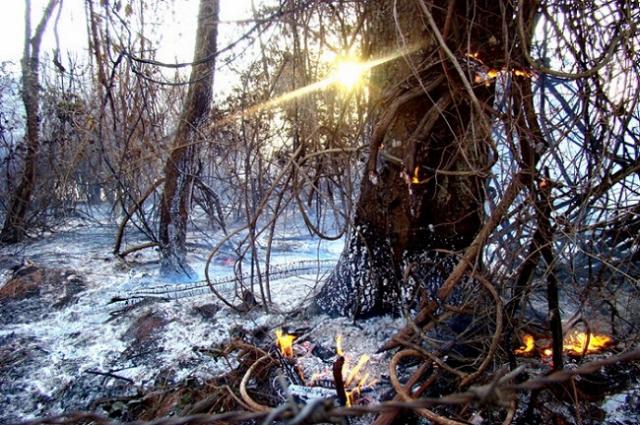 Focos de incêndios podem crescer até 66% este ano. - Crédito: Foto: Divulgação