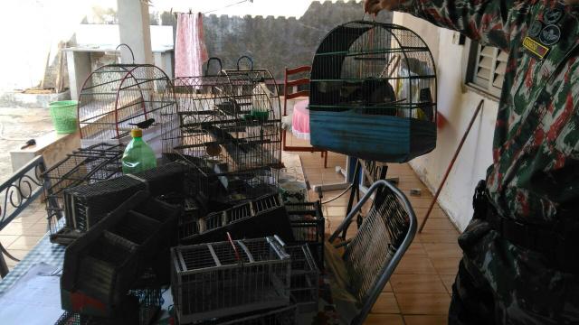 PMA autua infrator em R$ 2 mil por manter pássaros ilegalmente em cativeiro. - Crédito: Foto: PMA/Divulgação