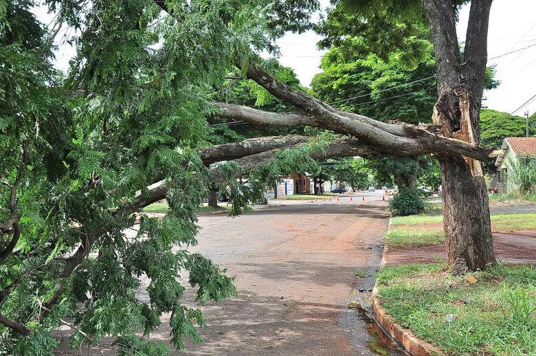 A cada chuva galhos e árvores inteira caem em Dourados Foto: Arquivo -