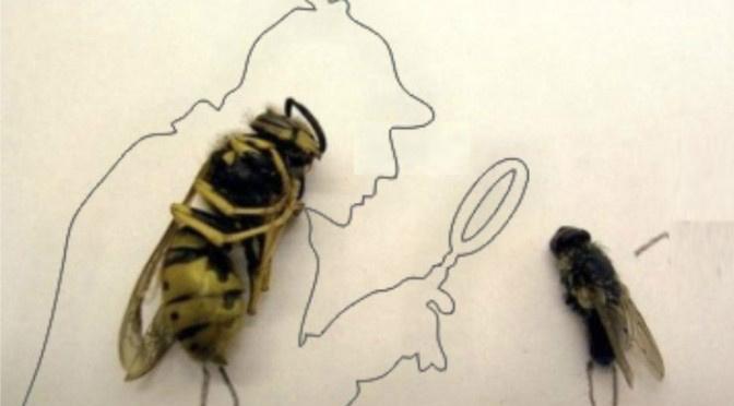 Você sabia que uma mosca pode ajudar um detetive a desvendar um crime? -