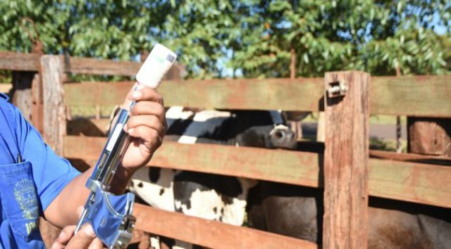 O prazo previsto no calendário oficial para realização da vacinação obrigatória do rebanho da região do Planalto contra a febre aftosa em Mato Grosso do Sul encerra nesta quarta-feira - Crédito: Foto: Divulgação