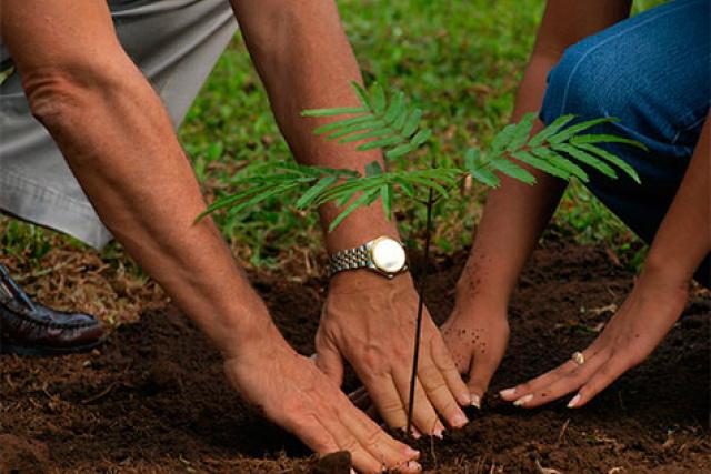 Durante os dias 8, 09 e 10 serão realizados o plantio de árvores na área urbana da cidade. - Crédito: Foto: Divulgação