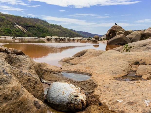 Peixes morreram com lama presente no Rio Doce - Crédito: Foto: Carlos Dório Costa/Divulgação