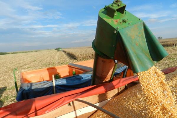 O milho 2ª safra começou a ser colhido em Mato Grosso do Sul há cerca de uma semana -
