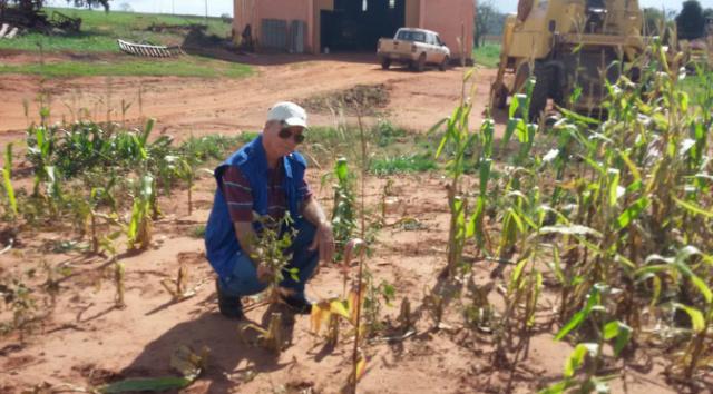 Vazio sanitário da soja tem inicio hoje no Mato Grosso do Sul. - Crédito: Foto: Divulgação