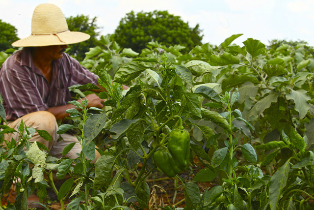 Hortifruti Legal  contabiliza mais de R$ 235 mil em vegetais. - Crédito: Foto: Divulgação