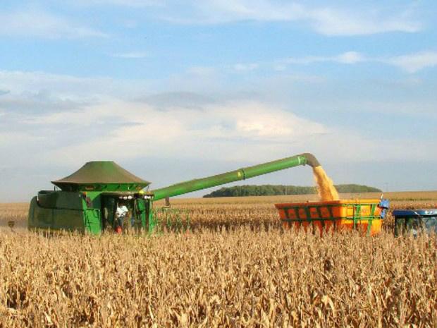Colheita do milho safrinha atingiu 6% da área cultivada em Mato Grosso do Sul - Crédito: Foto: Aprosoja/MS/Divulgação