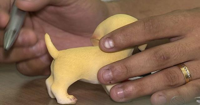 Agora é crime cortar rabo e orelhas de cães para fins estéticos -