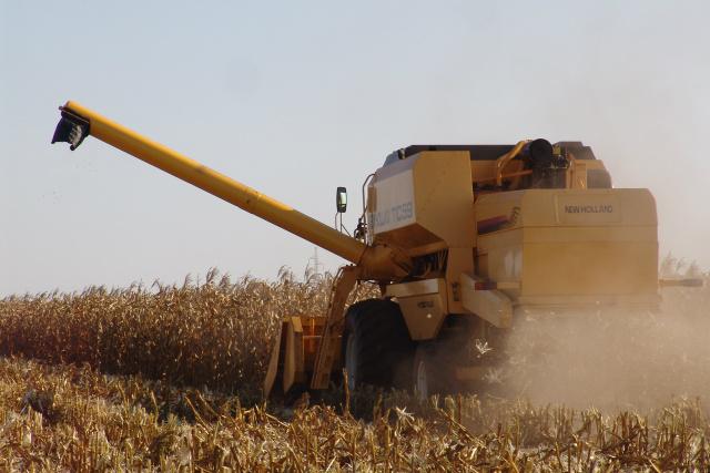 Pelo menos 15% da produção do milho segunda safra, foi colhida na região de Dourados. - Crédito: Foto: Hedio Fazan