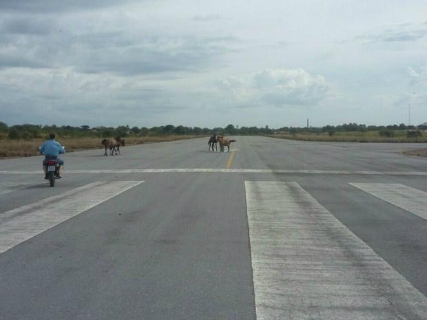 Homem como moto espanta os cavalos na pista do aeroporto de Porto Murtinho, na sexta-feira passada - Crédito: Foto: Edicarlos Oliveira/Arquivo Pessoal