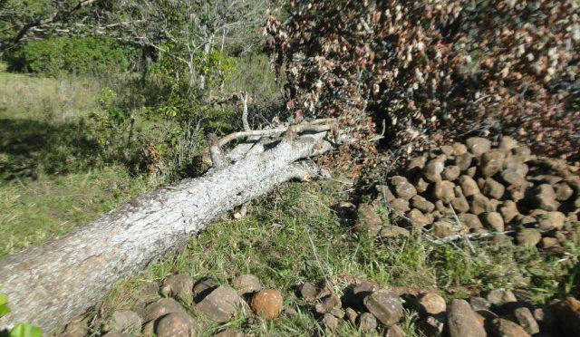 PMA autua proprietário rural em R$ 6 mil por desmatamento ilegal -