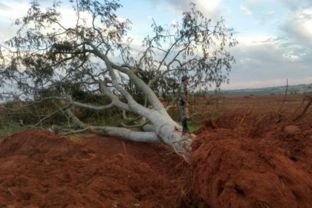 PMA autua empresa proprietária de fazenda por desmatamento de 82 árvores -