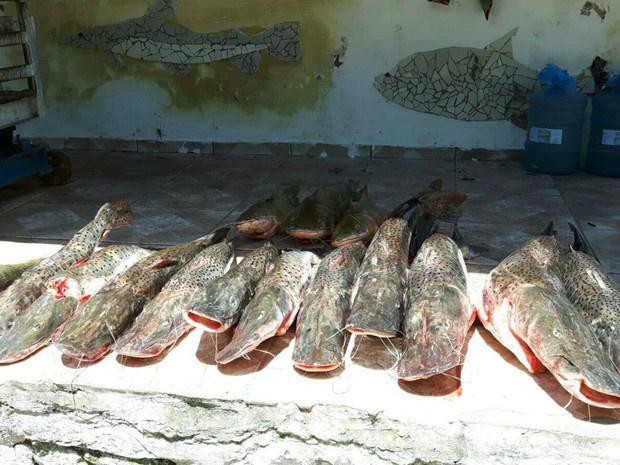 Quantidade de peixes capturados no Pantanal  cresce 18,6% -