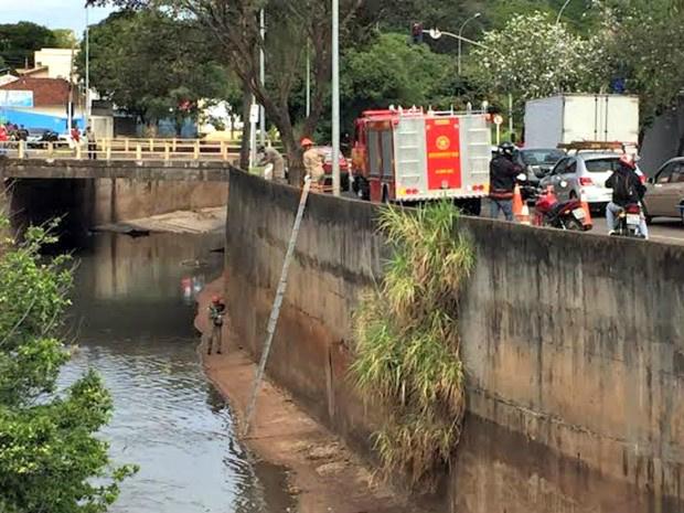 Bombeiros foram aplaudidos após resgate de animal - Crédito: Foto: Graziela Rezende/G1 MS