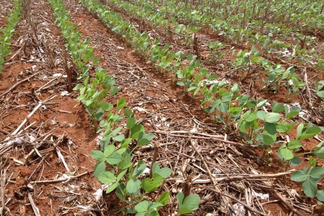 Manejo microbiológico do solo auxilia na prevenção de doenças aumentando produtividade - Crédito: Foto: Alltech Crop Science