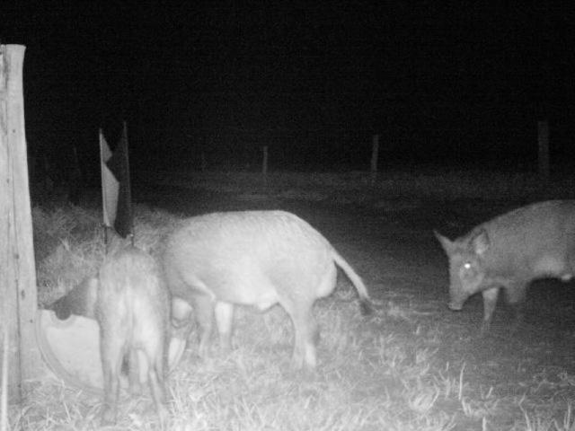 Armadilhas fotográficas registram animais - Crédito: Foto: Embrapa