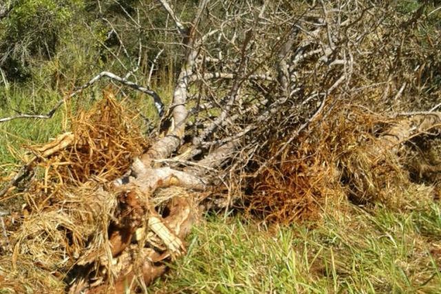 PMA autua proprietário rural por desmatamento sem autorização -