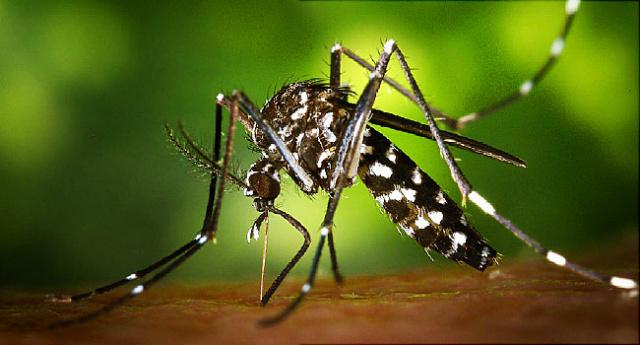 Colômbia declara fim de epidemia de zika -