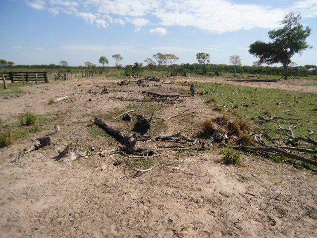 PMA autua três fazendeiros em R$ 29 mil por incêndio ilegal - Crédito: Foto: ASSESSORIA DE COMUNICAÇÃO DA POLÍCIA MILITAR AMBIENTAL - PMMS