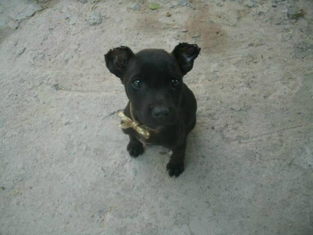 Jovem corta orelhas de cachorro e leva multa de R$ 2,2 mil -