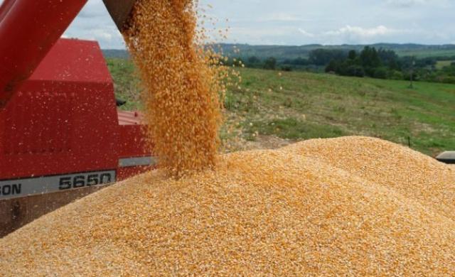 O destaque foi para as exportações de milho, que aumentaram 81% de janeiro a julho  em relação ao ano passado. - Crédito: Foto: Divulgação