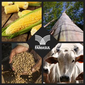 VBP da agropecuária atinge R$ 27 bilhões em 2016, segundo previsão do Sistema Famasul -