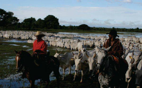 Portaria iguala as datas de vacinação contra febre aftosa das regiões do Planalto e da Zona de Fronteira. - Crédito: Foto: Divulgação