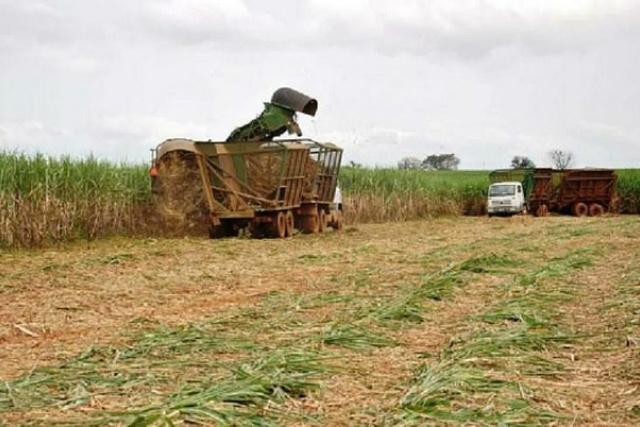 Agrotóxicos usados na monocultura da cana em SP elevam índices de adoecimento entre os agricultores e toda a população - Crédito: Foto: Arquivo Portal Brasil