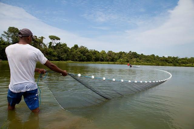 O programa ATeG Piscicultura tem o objetivo de fomentar o aumento da produção, - Crédito: Foto: Divulgação