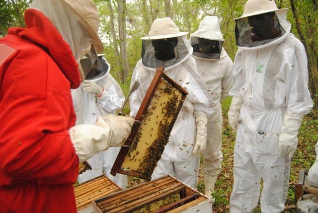 Mato Grosso do Sul é o maior produtor de mel por colmeia do país -